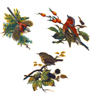 Set of 3 Birds