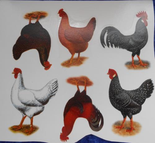 Chickens B
