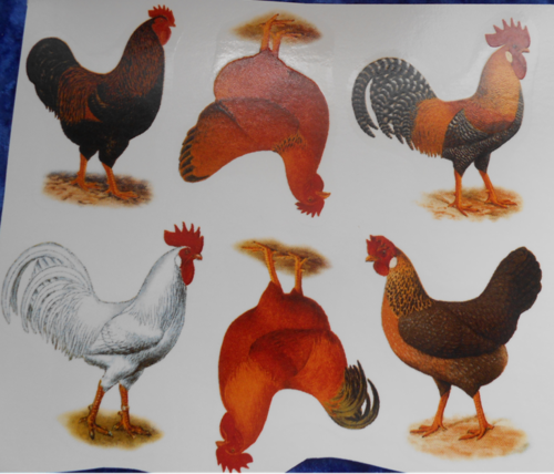Chickens C