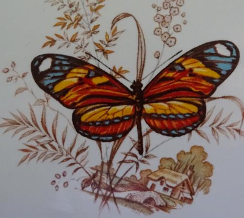 Butterfly B