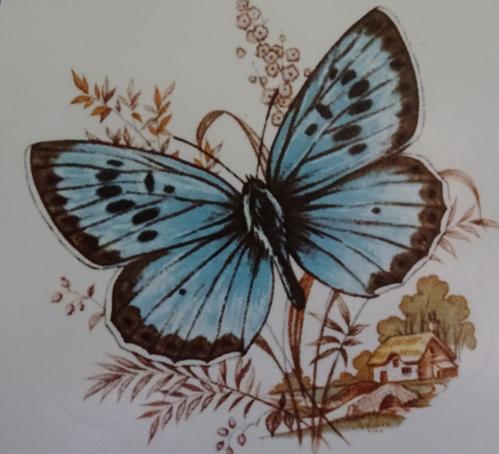 Butterfly C