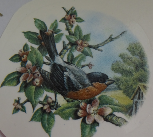 Bull Finch Decal