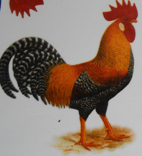 Chicken 1 Decal